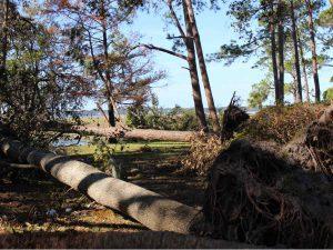 Hurricane Matthew Tree Damage